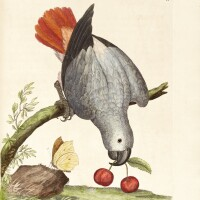 2. albin, a natural history of birds, 1731-1734