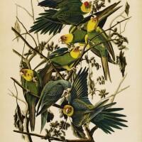 737. John James Audubon (after)