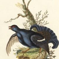 7. donovan, the natural history of british birds. london, 1799-1819, 10 volumes