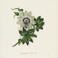 34. ten lithographic coloured flowers
