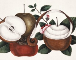 8. a collection of 8 chinese watercolours of exotic fruits. [nineteenth century]