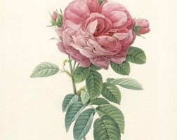 21. redoute, les roses, 1824