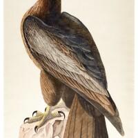 3. audubon, bird of washington, 1830s