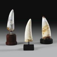 7. collection de trois dents de spinosaure (stromer 1915), mésozoïque, cénomanien, crétacé supérieur, maroc