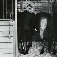 16. Helmut Newton