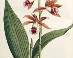 28. schneevoogt. icones plantarum 1792-1793-1795