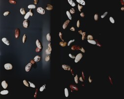 12. joao maria gusmao & pedro paiva | smaller than beans