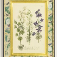152A. a set of eight hand-colored botanical engravings johann wilhelm weinmann (1683-1741)