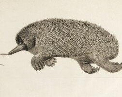 12. home. description of the anatomy of the ornithorhynchus hystrix. 1802