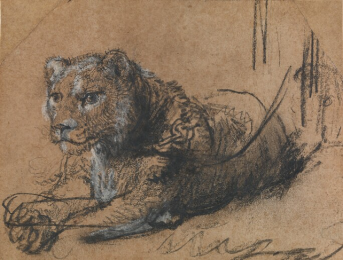 rembrandt-young-lion-resting.jpg