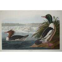 9. John James Audubon (after)