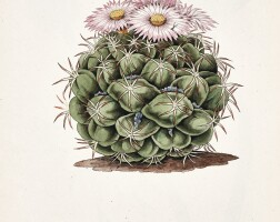 5. botanical watercolours, a collection