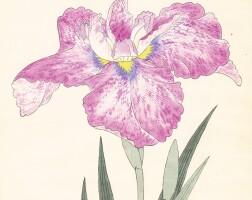 4. iris kaempferi, woodblock prints, c.1890