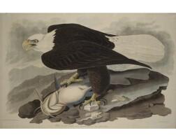 3. John James Audubon (after)