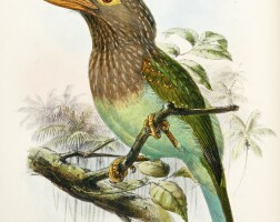 16. marshall, a monograph of the capitonidae, or scansorial barbets,1871