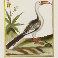 1. buffon. histoire naturelle des oiseaux. imprimerie royale, 1770-1786. éo sur grand papier, en coloris de l'époque.