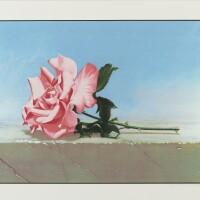 449. john kelley | andalusia rose