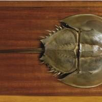 12. empreinte et contre empreinte de limule fossile, crétacé inférieur, liban