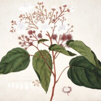 9. a collection of 15 chinese botanical watercolours, [canton?, nineteenth century]