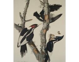 5. John James Audubon (after)