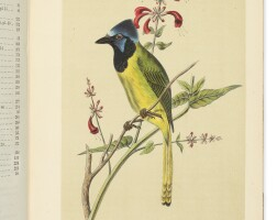 19. cassin, john. 'illustrations of the birds of california, texas, oregon, british, and russian america'. philadelphia: j.b. lippincott & co., 1856
