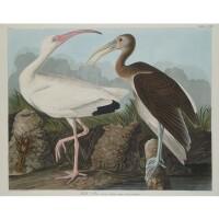 6. John James Audubon (after)