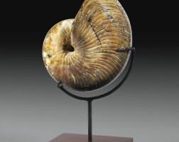 3. nautilus néocomiensis, albien, majunga, madagascar