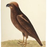 1. 27 watercolours of birds by eleazar and elizabeth albin, [early eighteenth-century]
