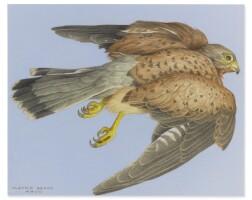 159. claudio bravo (1936-2011) | eagle
