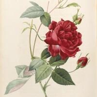 11. redouté, pierre joseph and c.l. thory
