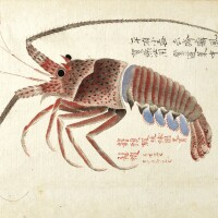 13. collection of 25 japanese watercolours of fish and other marine life. [mid-19th-century]