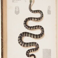 30. ewart, joseph. 'the poisonous snakes of india. for the use of officials and others residing in india'. london: j. & a. churchill, 1878