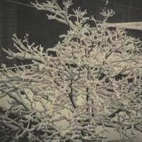 8. Alfred Stieglitz