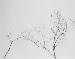 161. james welling (b. 1951) | branches (c), 2001