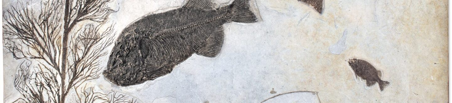 A rare fish fossil in an auction selling natural history objects