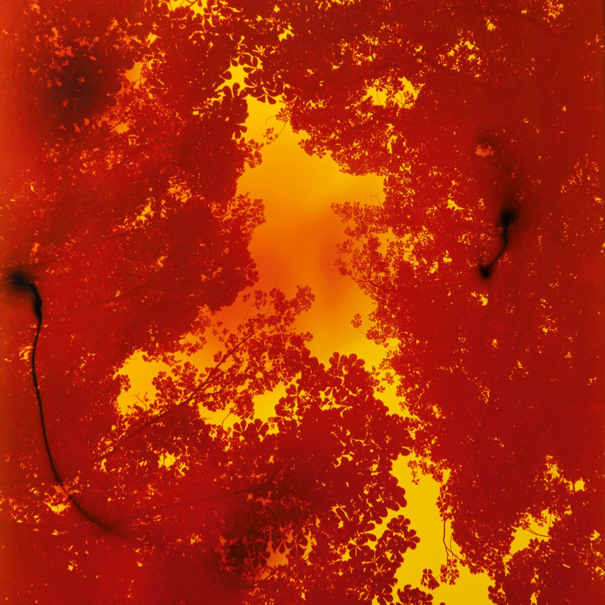 Wolfgang Tillmans Poetic Abstraction Photographs Sotheby S