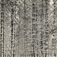 1. Ansel Adams, attributed to