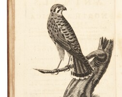 12. forster, a catalogue of the animals of north america, 1771