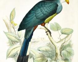 26. schlegel, de toerako's, 1860