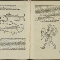 3. avienus, rufus festus. arati phaenomena. venice: antonius de strata, de cremona, 25 october 1488