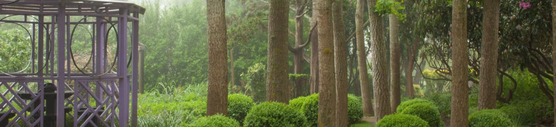 The Gingko Grove at the Madoo Conservancy