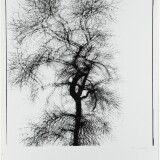 Harry Callahan. Multiple Exposure Tree, Chicago. 1956. The Baltimore Museum of Art- Purchase with exchange funds from the Edward Joseph Gallagher III Memorial Collection; and partial gift of George H. Dalsheimer, Baltimore, BMA 1988.258. ©.jpg