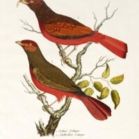19. merrem, beytrage zur besondern geschichte der vogel, 1784