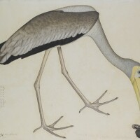 20. a study of a stork, from the lady impey series, signed by shaykh zayn al-din, company school, calcutta, dated 1781