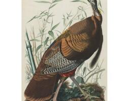 2. John James Audubon (after)