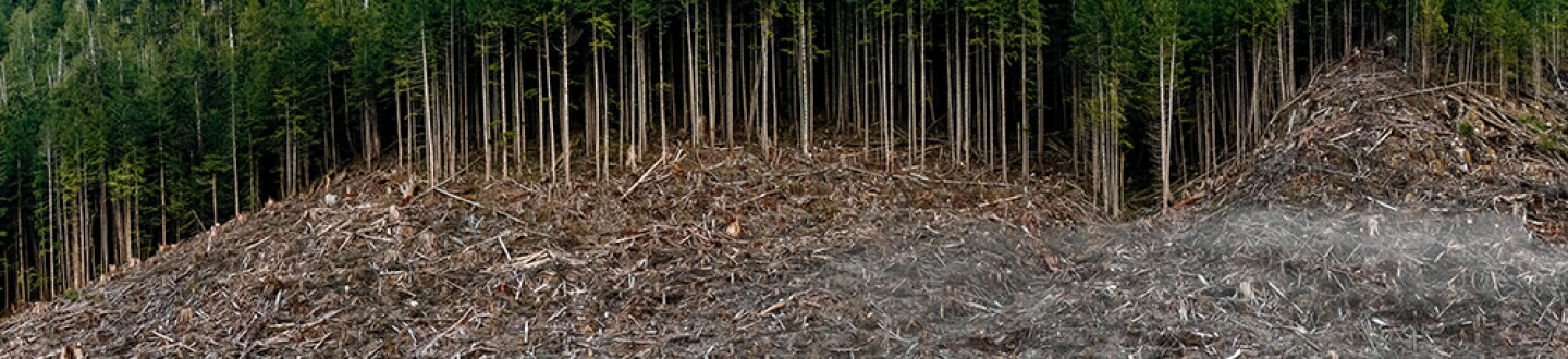 Clearcut #5, Vancouver Island, BC, Canada 2017.jpg