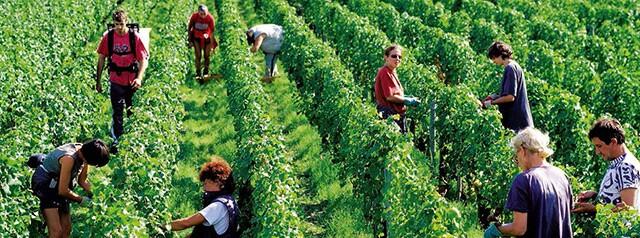 wine-futures-vineyard-1.jpg