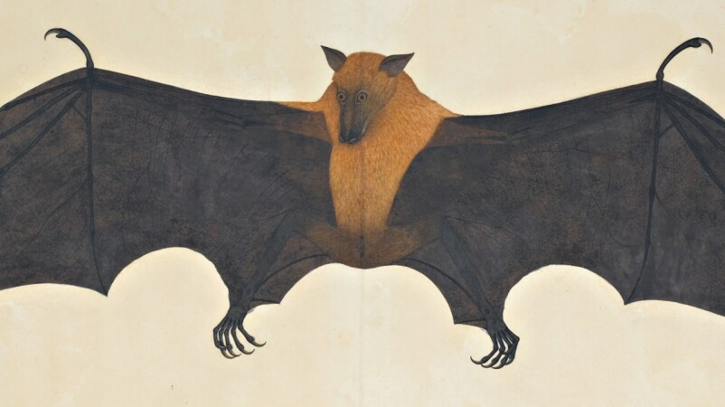 The Rich Flora and Fauna of Indian Company School Paintings