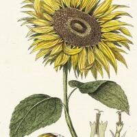 22. philibert. exercises de botanique. 1801