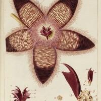 16. jacquin. miscellanea austriaca. 1778